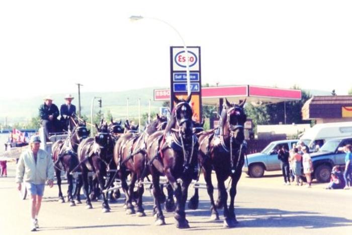 Fall Fair Parade, Carriage with 8 horses, Dawson Creek, BC, 1995