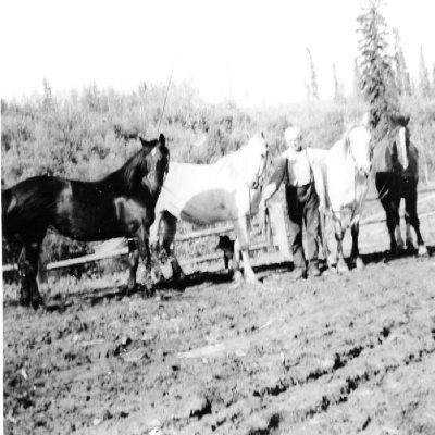 Slim Gooding, with his four Horses 1952