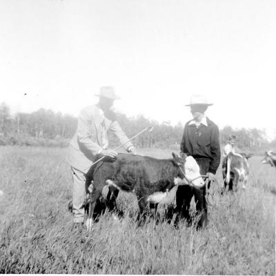 4-H Achievement Day, Bob Dilworth, Warren Studley (Roan Calf), Sunrise Valley, BC 1955